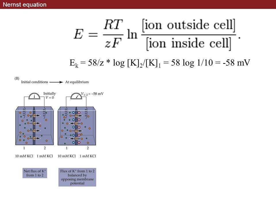 Ek = 58/z * log [K]2/[K]1 = 58 log 1/10 = -58 mV